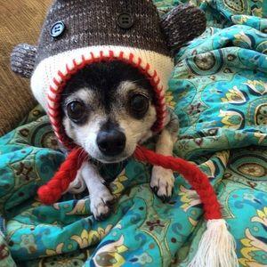 Small dog Sock monkey hat 💖💖💖 HOST PICK 💖💖💖